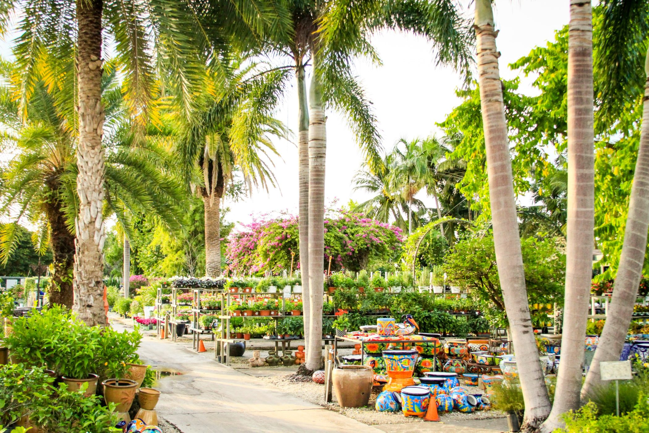 living color garden center fort lauderdale fl plants pottery more