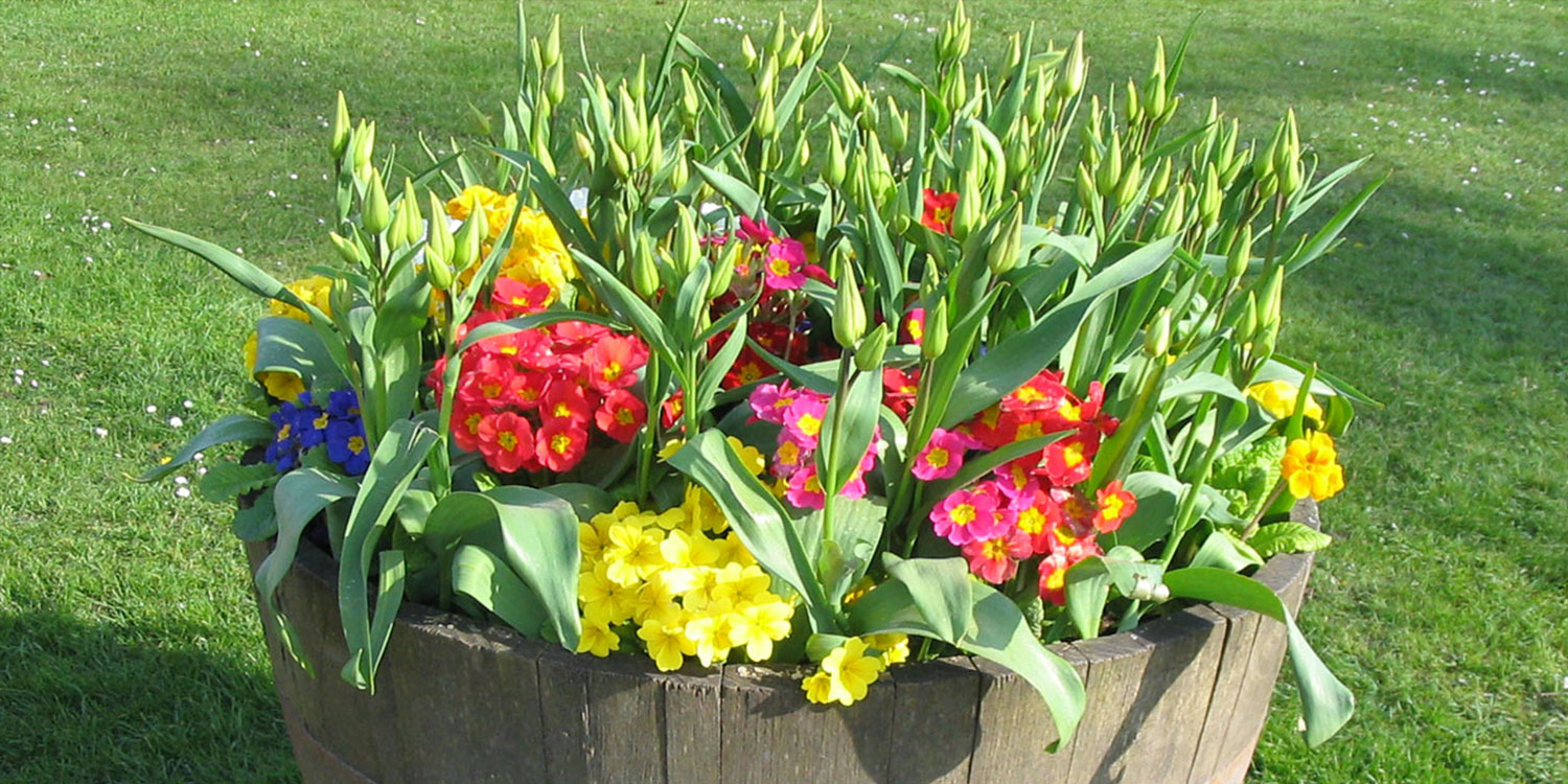 flower pots with various blooming flowers
