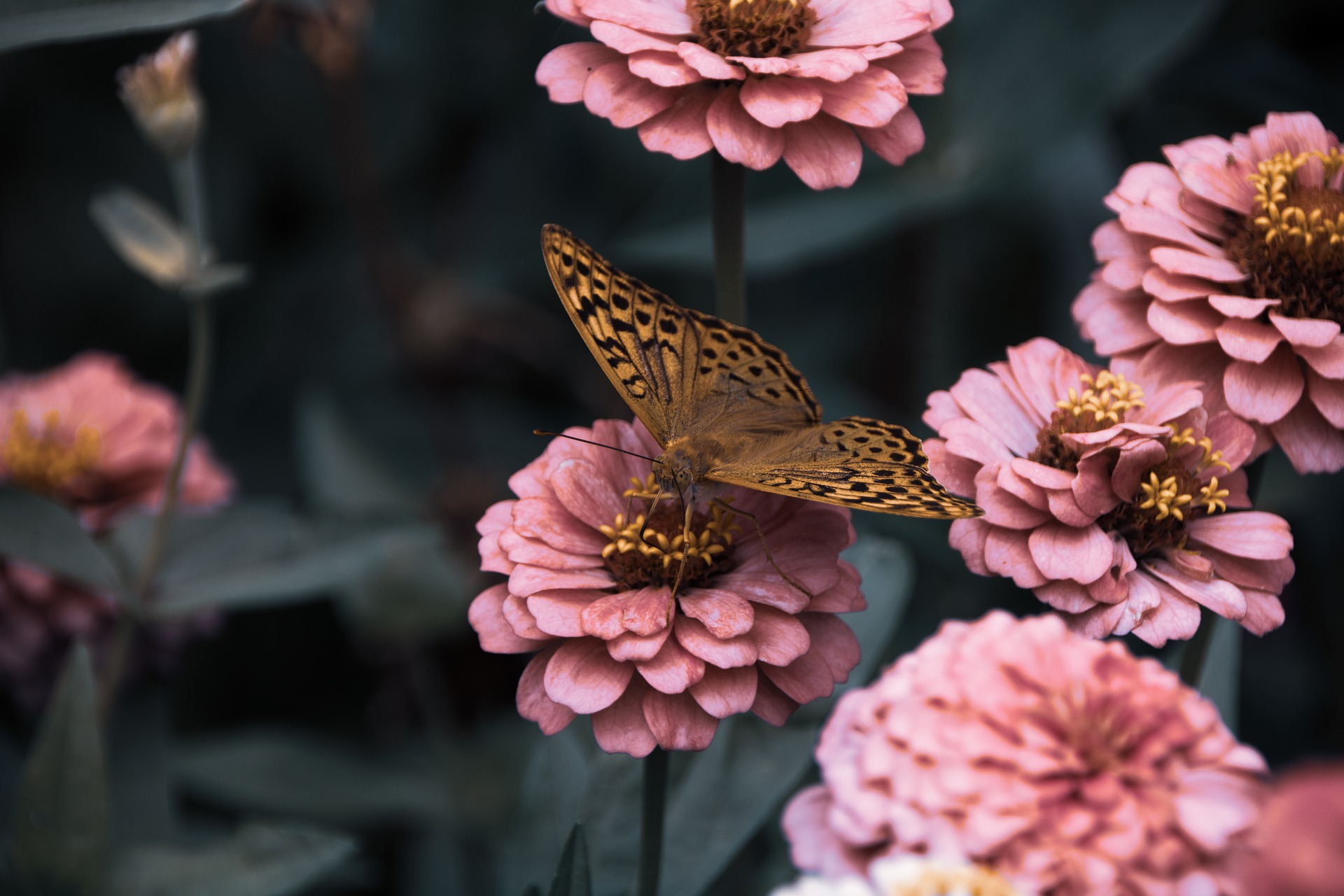 butterfly with flowers in garden