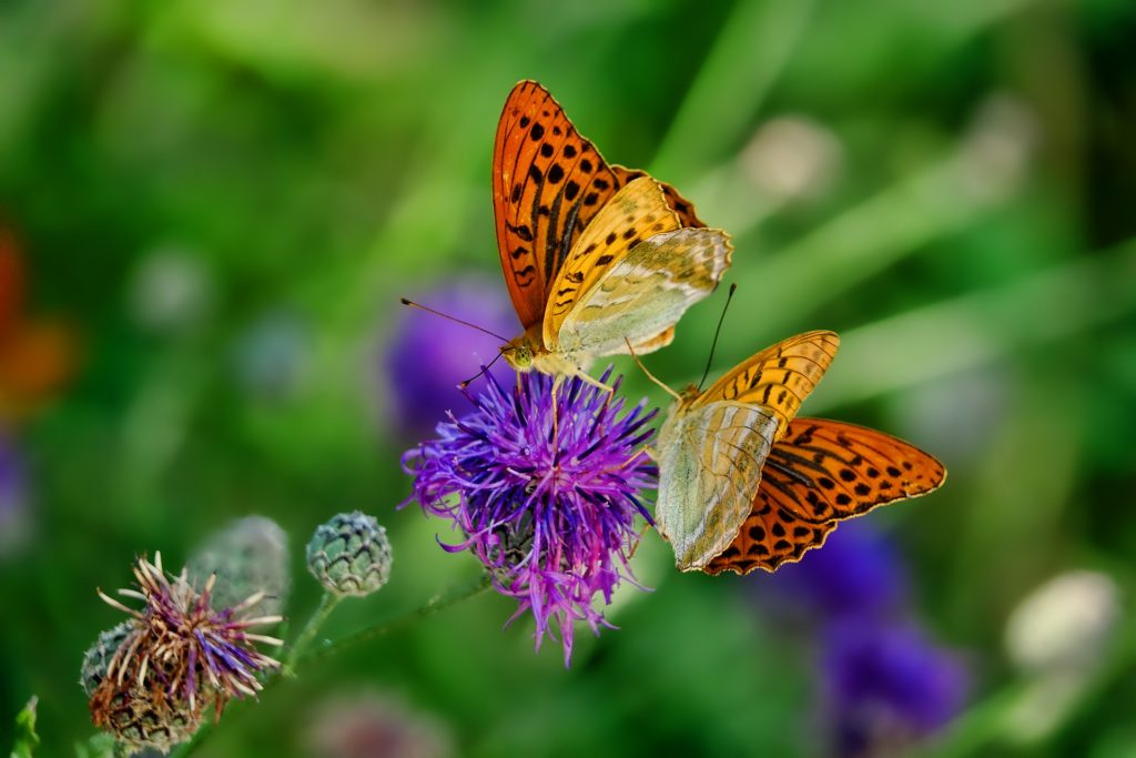 butterfly with flower in garden