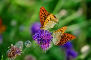 butterfly with flower in garden