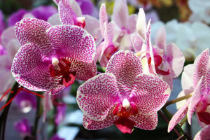 exotic flowers header vanda orchid