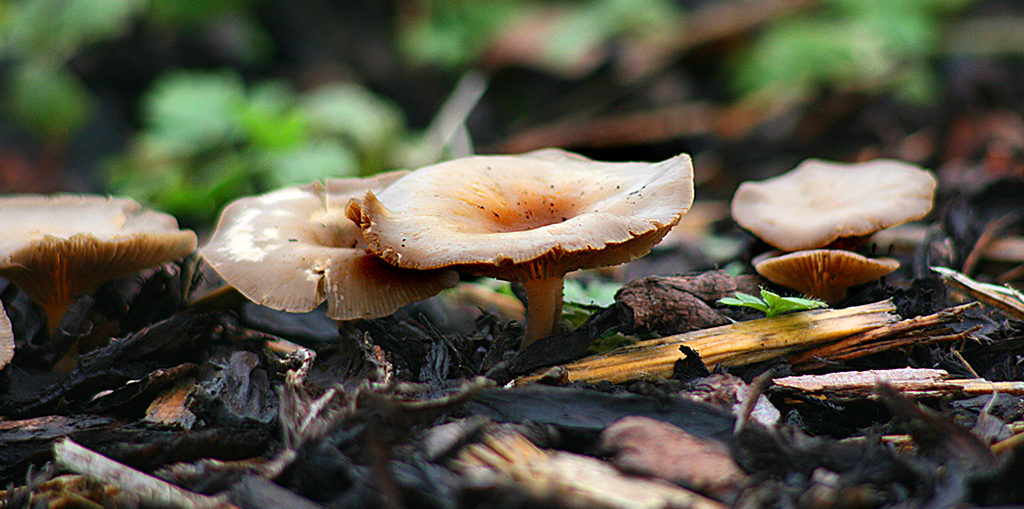Fungus - Living Color - Fort Lauderdale