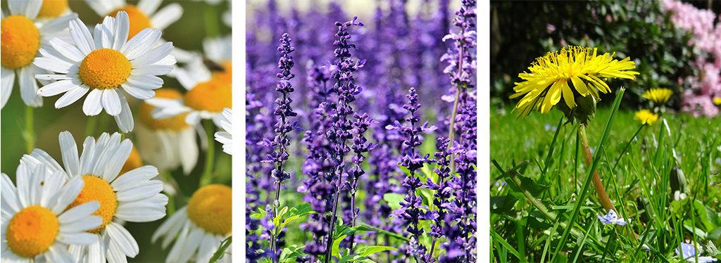 Medicinal Plants herbal medicine For Lauderdale