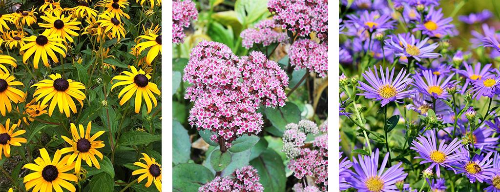perennial blooming calendar fall