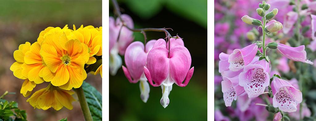 perennial blooming calendar spring