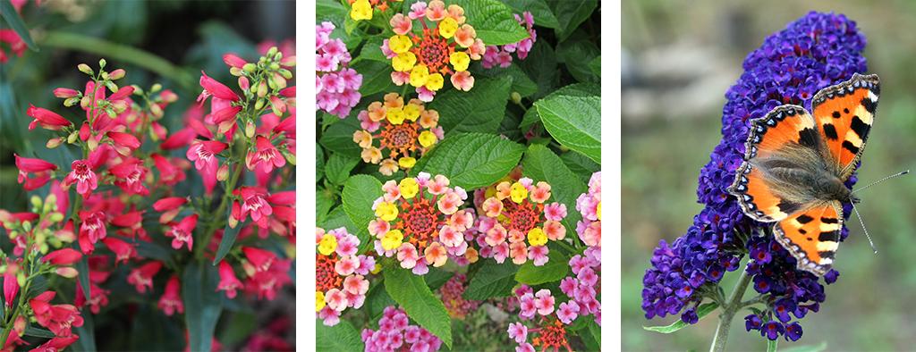 perennial blooming calendar summer