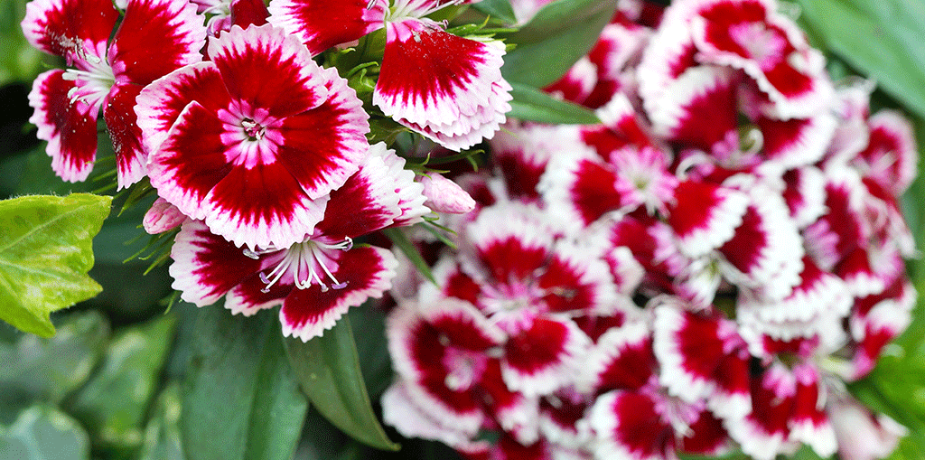 The Top 12 Groundcover Plants For Florida, Ground Cover Flowering Plants