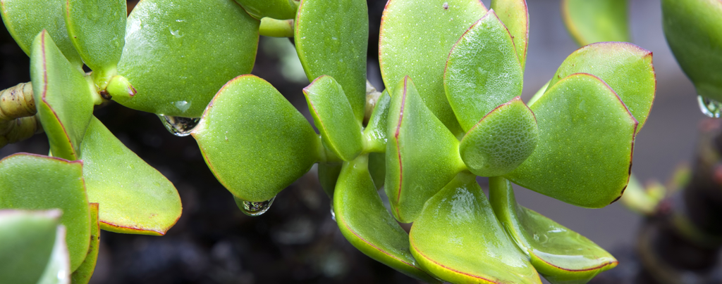 A-complete-guide-to-pruning-in-soflo-succulent