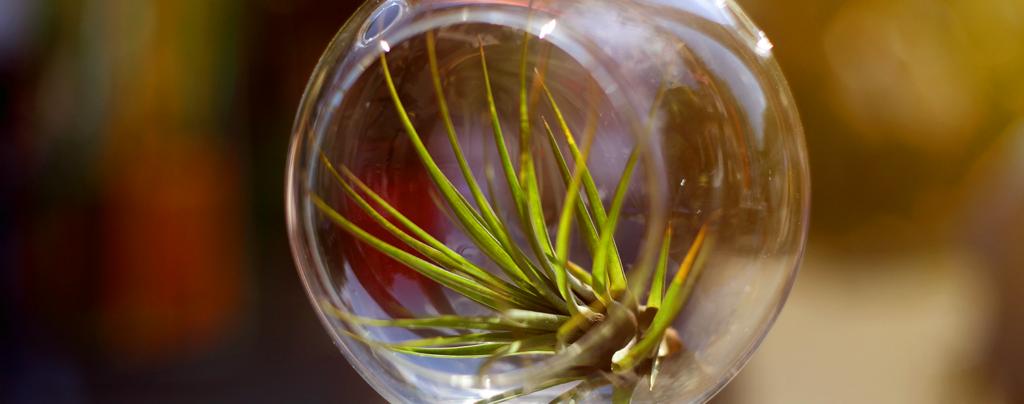the-best-terrarium-plants-for-diy-container-arrangements-air-plant
