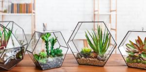 the-best-terrarium-plants-for-diy-container-arrangements