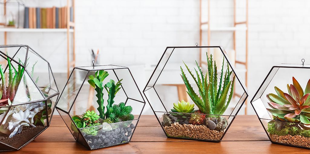 The Best Terrarium Plants For Diy Container Arrangements