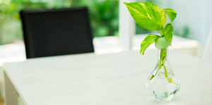 water-plants-everything-you-need-to-know-pothos