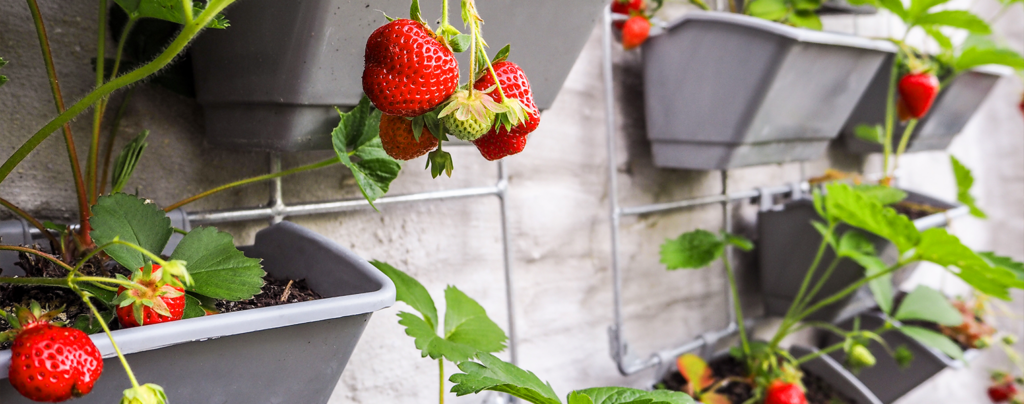everything-you-need-for-growing-an-edible-living-wall-vertical-strawberries