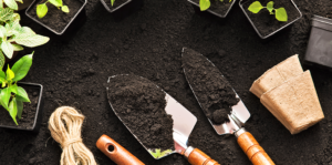 your-garden-tool-guide-all-the-basics-and-more-header-tool-plants