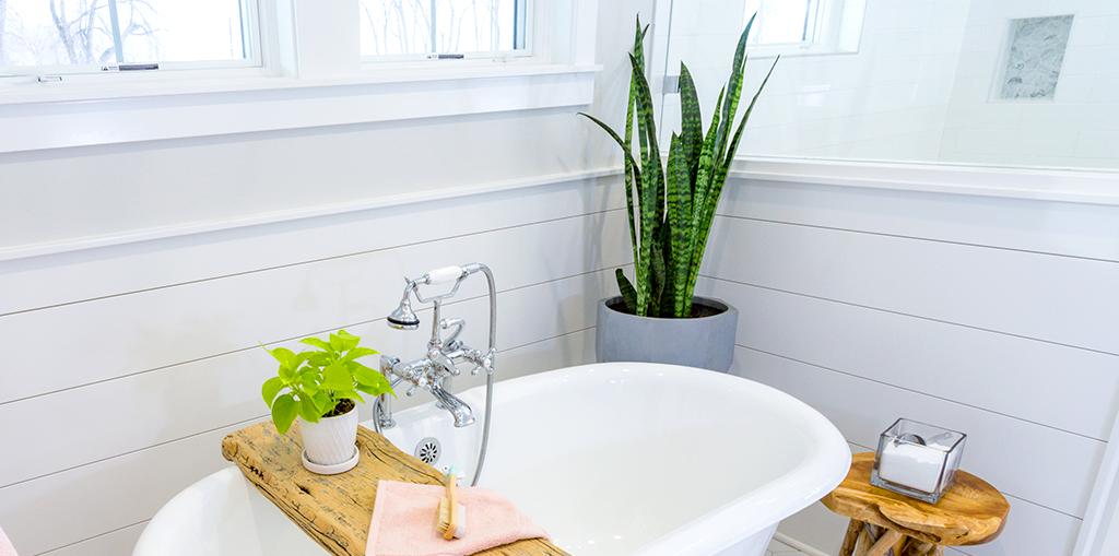 tropicals-air-purifiers-bathroom-plants