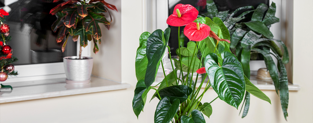 tropicals-air-purifiers-flamingo-lily