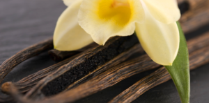 vanilla-orchids-orchid-and-beans-up-close-header
