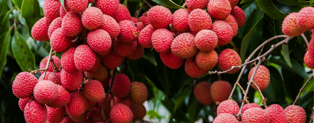 5-tropical-fruits-south-florida-lychee