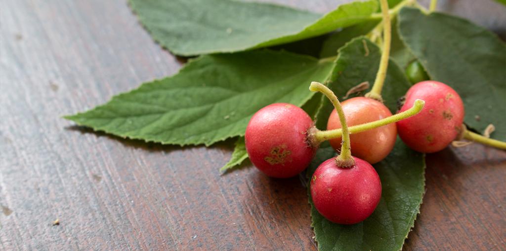 expert-tips-growing-strawberry-tree-berries-leaves-header