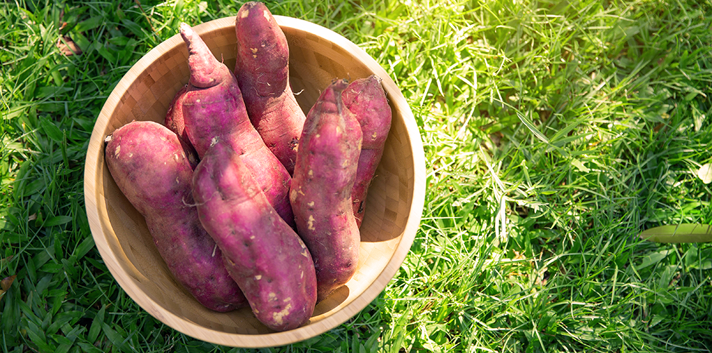 how-to-grow-perfect-sweet-potatoes-potatoes-in-basket-feature