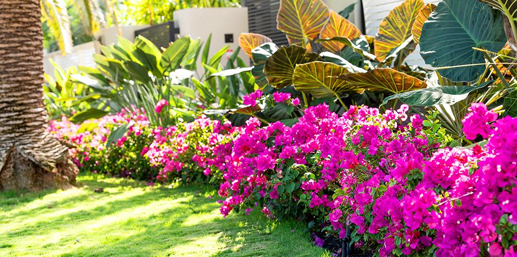 summer-florida-garden-header-living-color