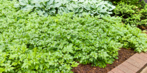 living-color-ground-cover-plants-header