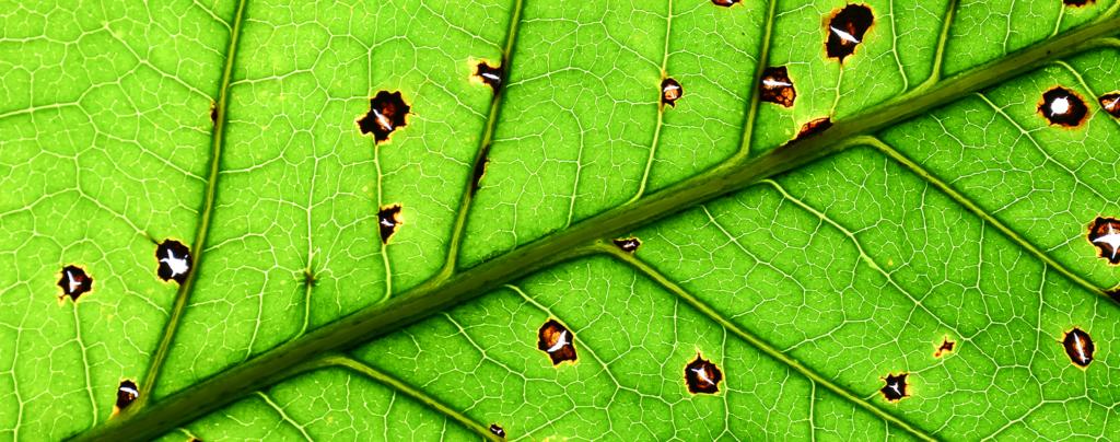 living-color-summer-gardening-leaf-damage