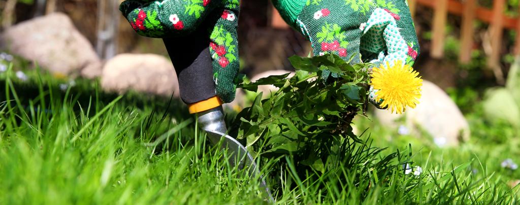 living-color-summer-gardening-pulling-weeds