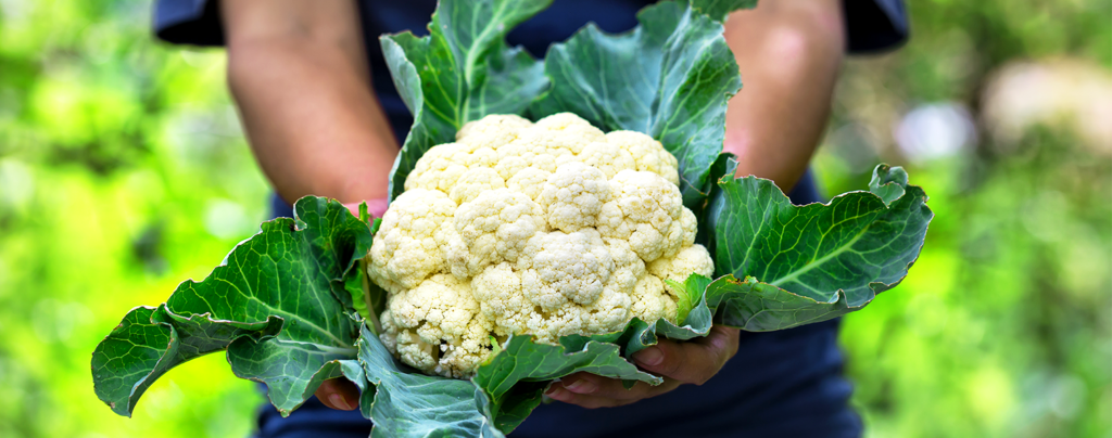 living-color-favorite-cool-season-fruits-veggies-person-holding-cauliflower