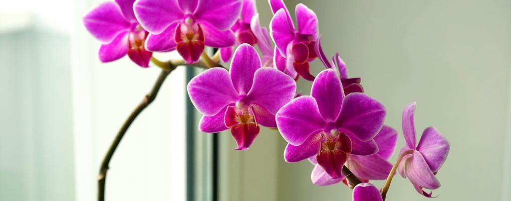 living-color-favorite-tropical-houseplants-orchids