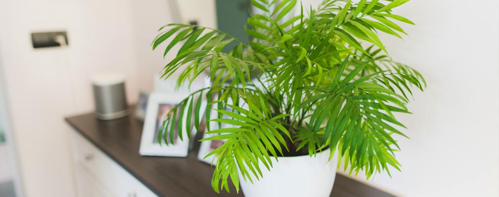 living-color-favorite-tropical-houseplants-parlor-palm