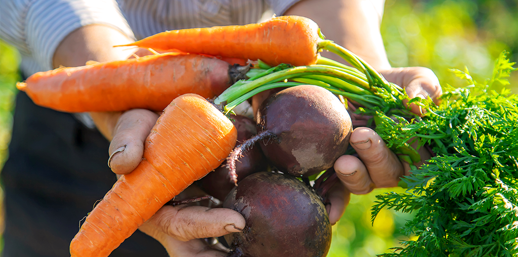 living-color-vegetable-planting-calendar-hands-holding-carrots-beets