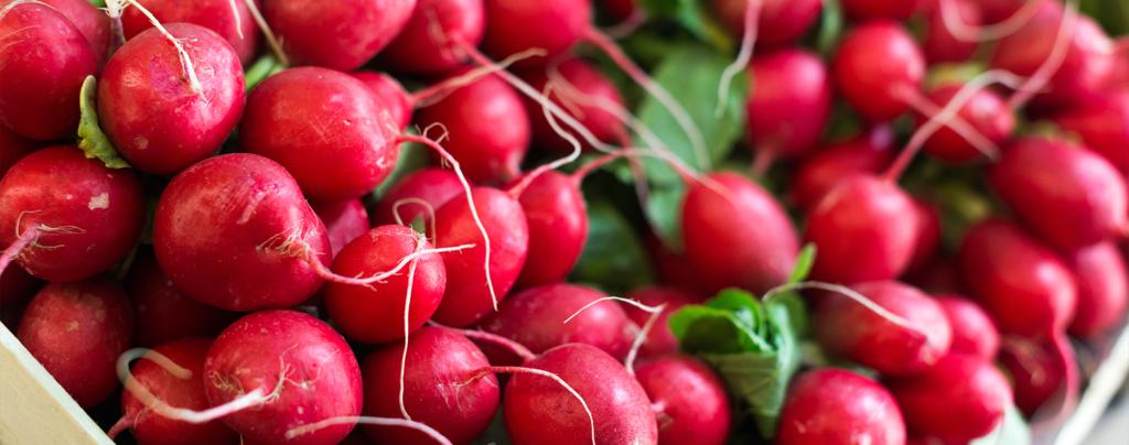 living-color-vegetable-planting-calendar-radishes
