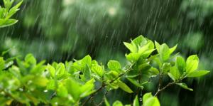 living-color-managing-wet-weather-header-rainstorm
