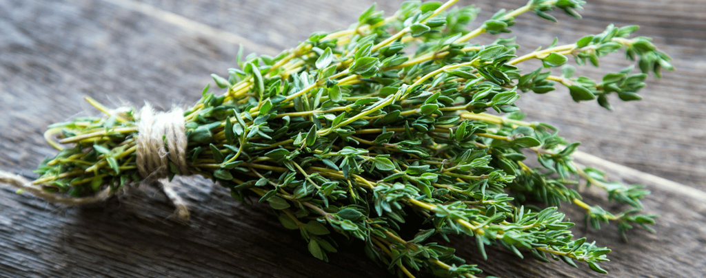 living-color-plant-herbs-at-home-thyme