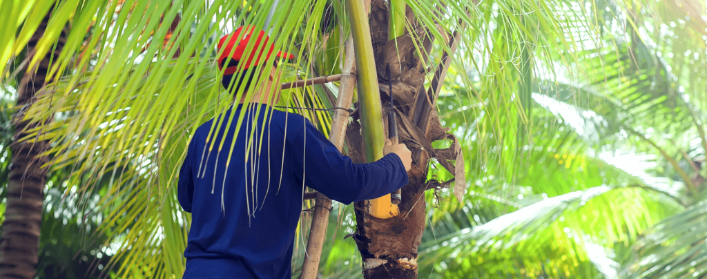 living-color-palm-tree-pruning-man-on-ladder