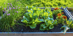 living-color-edible-container-gardening-ideas-salad-greens-chives