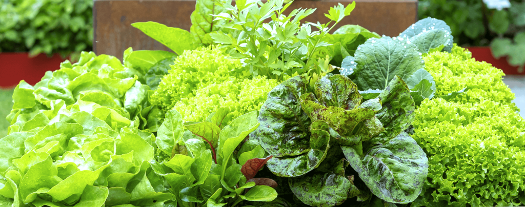 living-color-edible-container-gardening-lettuce-kale-parsley