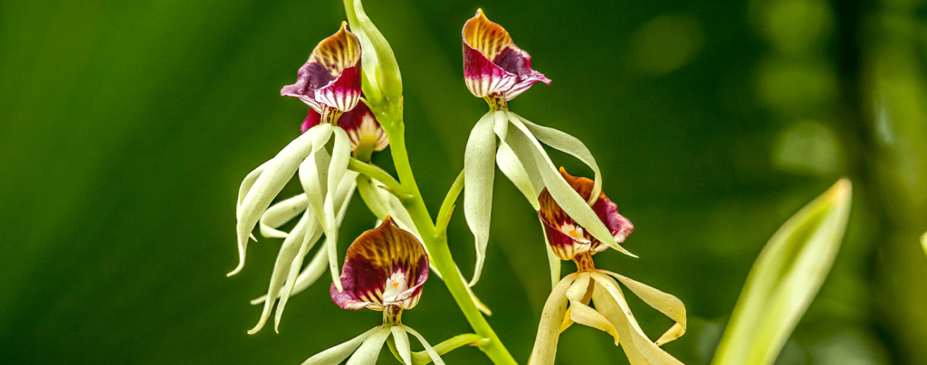 living-color-six-favorite-orchids-clamshell-orchid