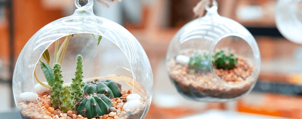 living-color-DIY-succulent-terrarium-hanging