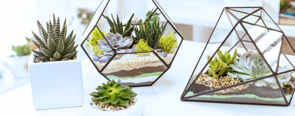 living-color-DIY-succulent-terrarium-sand-art