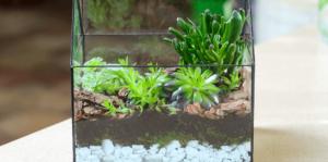 living-color-DIY-succulent-terrarium-square-container