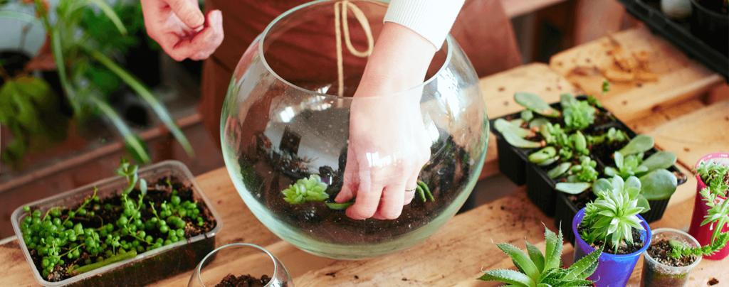 living-color-person-making-DIY-succulent-terrarium