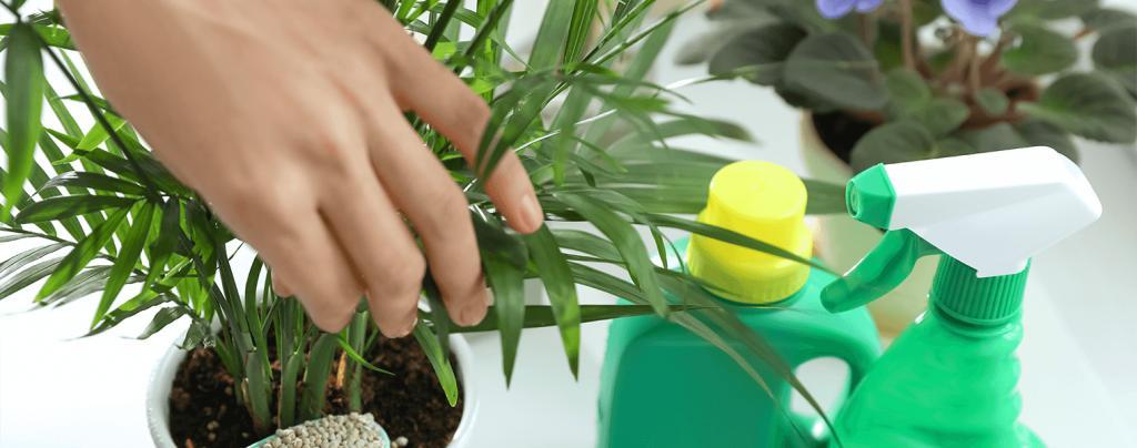 living color best fertilizers tropical fruits flowers palms
