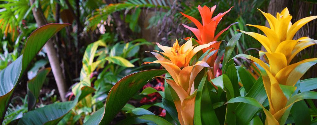living color best fertilizers tropical fruits flowers palms bromeliads red orange_