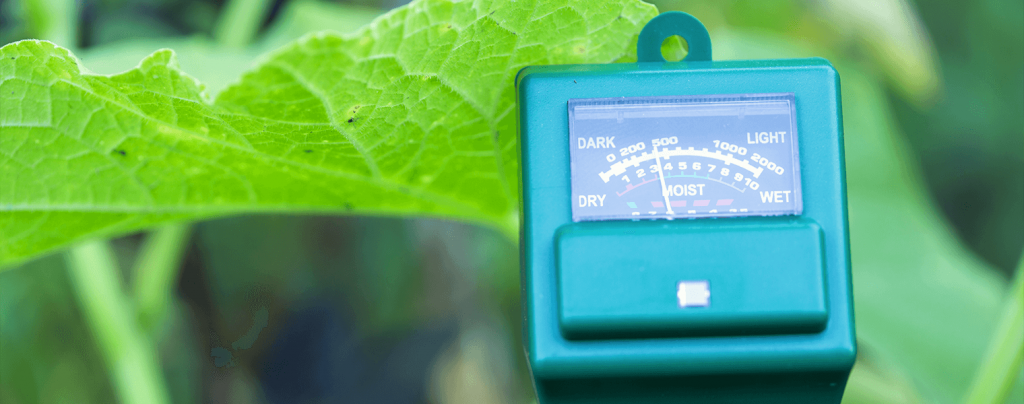 living color planting caring for key lime tree ph meter soil test