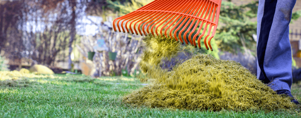living color spring lawn care raking dethatching lawn