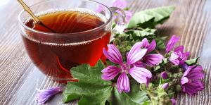 living color garden center edible tropical plants hibiscus tea
