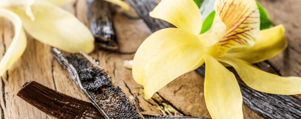living color garden center edible tropical plants vanilla orchid with beans